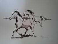 cavalos-8